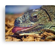 Iguana Sticking out his Tongue Canvas Print