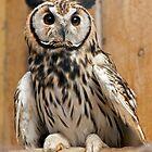 Owls ' R' Us by Krys Bailey