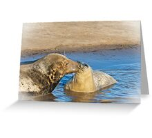The Grey Seal 	  Halichoerus grypus Greeting Card