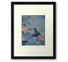 Winter Bluejays Framed Print