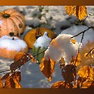 Pumkins in the snow by steppeland