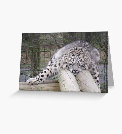 Snow leopard dreams.... Greeting Card