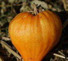 tomato heart by Fran E.