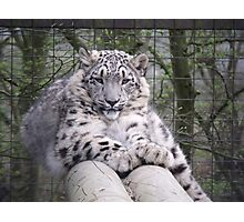 Hara from Paradise Wildlife Park Photographic Print