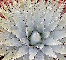 Yucca Plant by John Butler