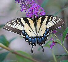 Swallowtail With Blue by Terry Aldhizer