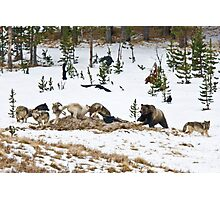 Grizzly Attack! Photographic Print