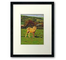 Horse#2 Framed Print