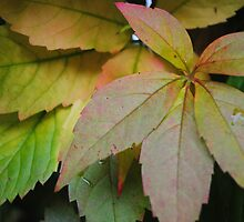 Rainy Day Leaves by Christine Lake