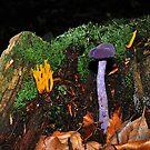 Purple and oranje by Paulo van Breugel