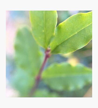 Leafy Lovelies Photographic Print