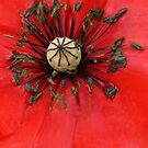 Remembrance by DIANE  FIFIELD