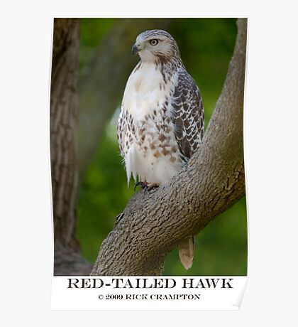 Red Tail Poster