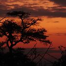 Sunset over the Serengeti by Sheila Smith
