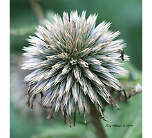 Cool Flower When Close Up Photographic Print