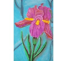 Keeping an Iris on You Photographic Print