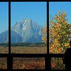 The View by Ann  Van Breemen