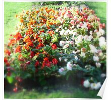 Just a Little Flower Bed Poster