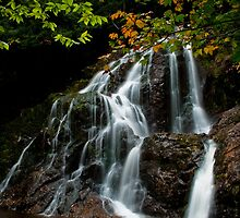 Autumn Cascade by Charles Plant