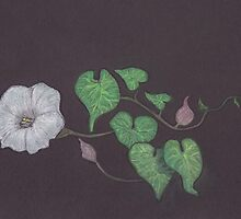 Bindweed by MagsWilliamson