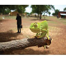 Chameleon and a Briefcase Photographic Print