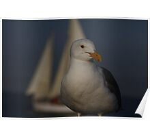 Seagull Inport Poster