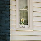 Flower in Window by Jay Gross