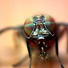Fly - Closeup III by kutayk
