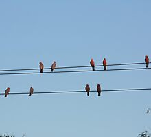 Birds on a Wire by canonhighlights