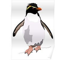 Bird - Illustration - Rockhoper Penguin Poster