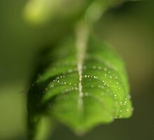 The landscape of a new leaf by Melani