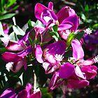 Purple Flowers by Tara Schultz
