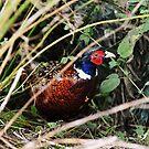 The evasive pheasant by Alan Mattison