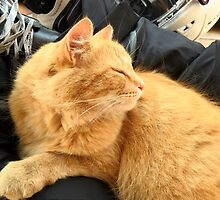 hockey-cat-kim by marella