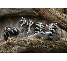 lemurs in a tree Photographic Print