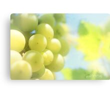 Vineyard magic Canvas Print
