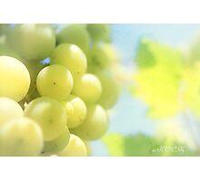 Vineyard magic Photographic Print
