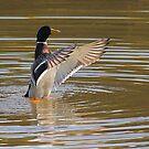 Dancing duck by wizard327