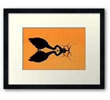 Silhouetted Great Blue Heron hunting. Framed Print