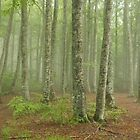 Misty forest - Pyrenees, Spain by Ben Collins