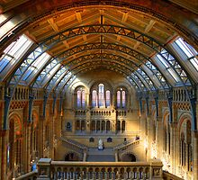 Natural History Museum - London by Bryan Freeman