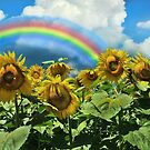Buttonwoods Sunflowers with Rainbow by Corinne Noon