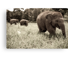 Play Time Canvas Print