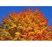 Golden Tree, Westonbirt Arboretum Photographic Print