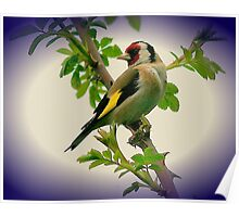 Grainy Goldfinch Poster