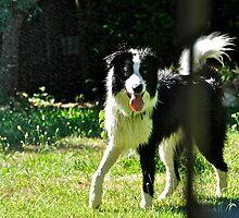 Sprinkler Fun by Helen Vercoe