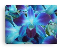 Blue Orchid Canvas Print