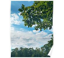 Trees Against Clouds in Boothbay Poster