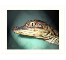 Baby Gator Art Print