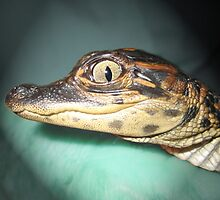 Baby Gator by Savannah Gibbs